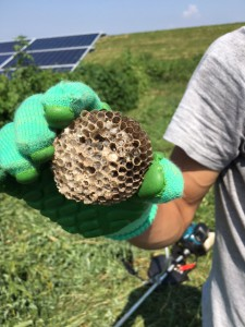 伊勢崎ハチの巣