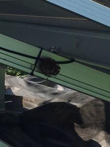 伊勢崎 ハチの巣